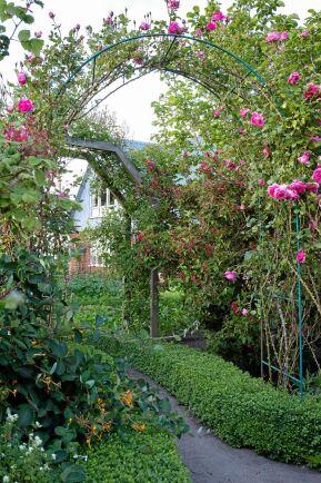 Längs vägen in till trädgården väver en orange kaprifol och den mörkröda trädgårdsprakttryn ihop de båda portalerna med klätterrosor och bildar tunnel.
