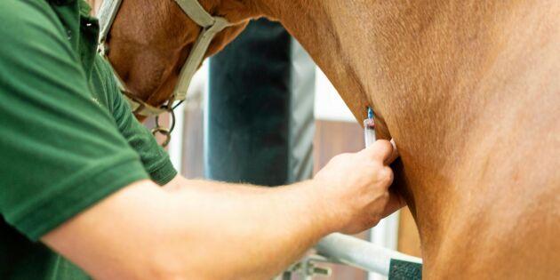 Sverige behöver fler veterinärer