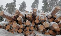 Bekämpningsmedel minskar i svenska skogen