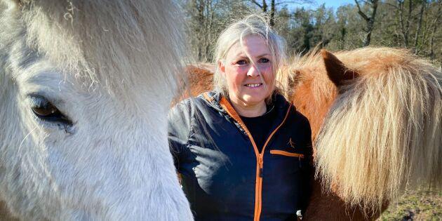 Hästgårdar kämpar för sin överlevnad