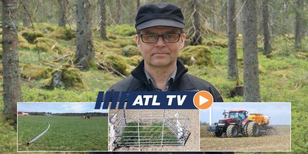 ATL TV: Gran betas hårt av hjortar