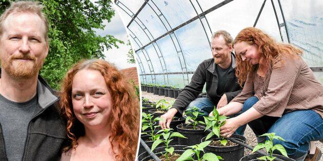 Mariana och Martin odlar chili mitt i den småländska skogen