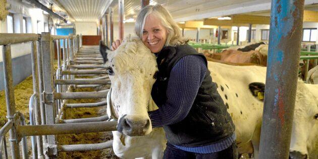 Bonden Anne: Därför kostar min ko Josefins mjölk 40 kronor litern