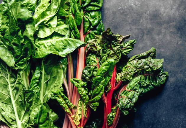 Det blir mycket att äta både direkt och till vintern. Spenat och mangold är en guldgröda för matvrak.