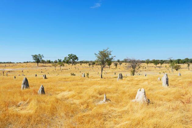 Värst har torkan slagit mot områdena New South Wales (NSW) och Queensland på landets östkust.