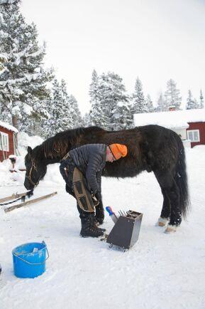 Pecka jobbar som hovslagare i Jämtland och Härjedalen
