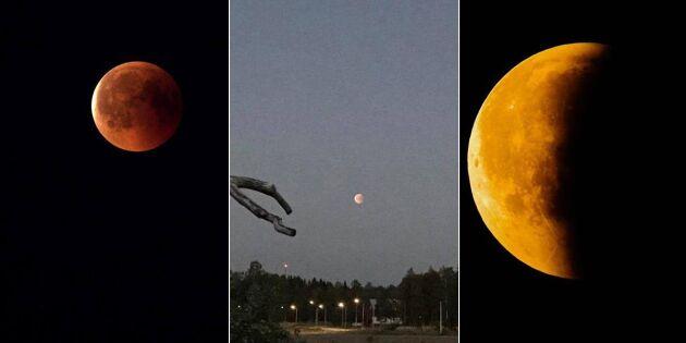 Så vacker var blodmånen över Sverige – kolla in läsarnas fina bilder!