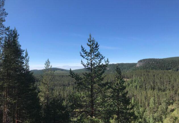 Med 2,6 miljoner hektar skog i norra Sverige är SCA Europas största privata skogsägare. Nu siktar de på att köpa mer skog i Baltikum.