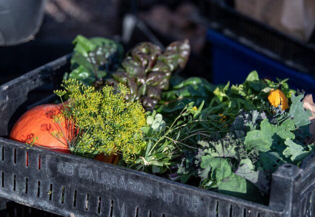 Grönsaker klara för leverans till kund då ekoringens medlemmar samlats på en parkering i Värpinge utanför Lund i september 2019. Arkivbild.
