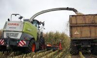 Sabotör gömde stålrör i majsfält