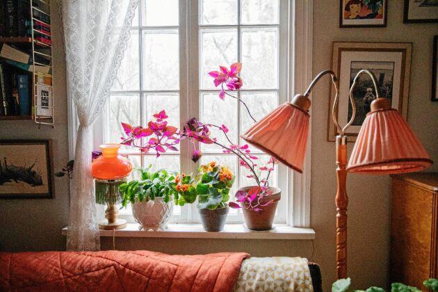 Skira spetsgardiner och blommor i fönstret i vardagsrummet.