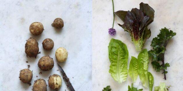 Fantastiskt god potatis - rosta den färsk i ugn!