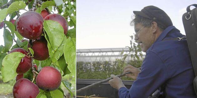 Kolla in Mandelmanns nya spännande fruktträd!