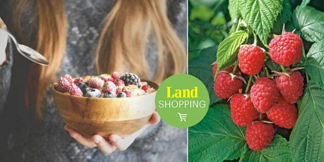 Växtpaket med 10 plantor! Skörda smakrika bär från juli till oktober