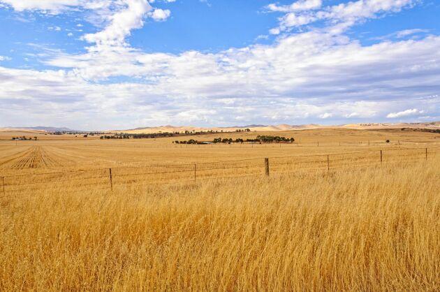 Ett saudiarabiskt investmentbolag, Salic, har köpt 200 000 hektar jordbruksmark i västra Australien.