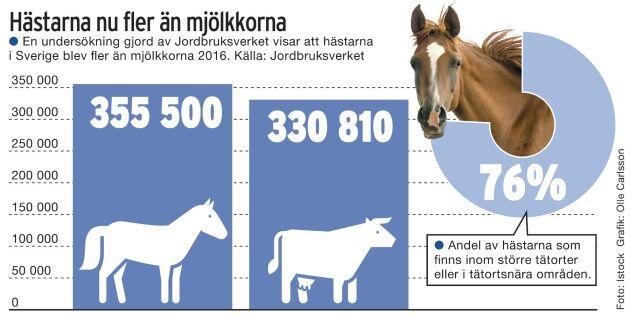 Fler hästar än mjölkkor