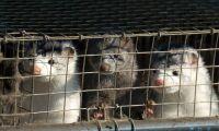 Beslut i morgon om nya djurskyddslagen