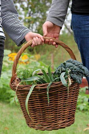 Äntligen ätbart från grönsakslandet. Gödsla och så nytt när du skördat.