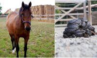 Ny miljörådgivning till hästhållare