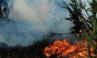 """Skogsbrand hotade fastighet: """"Oroliga att det ska blossa upp"""""""