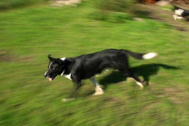 Fästingmedlen tar inte bara död på fästingarna. De kan också ge mer eller mindre allvarliga biverkningar på hundarna.