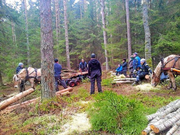 Torbjörn leder en kurs i lastning vid skogskörning med häst.