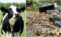 Djuren blir lidande när skräp slängs i skog och mark