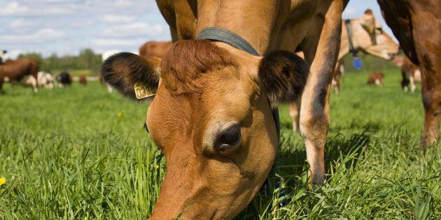 Sveriges Mjölkbönder ansatte politiker och myndighetschefer