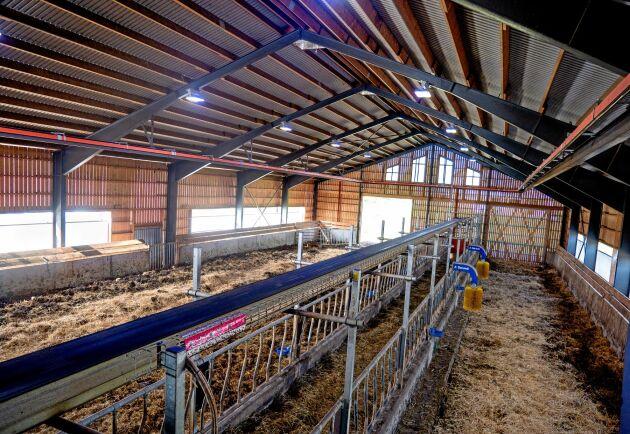 Investeringen i den nya ladugården som är byggd med inspiration från ett mjölkrobotstall landade på drygt 3,5 miljoner.