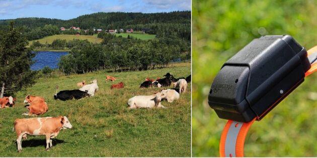 Håll koll på kon med gps