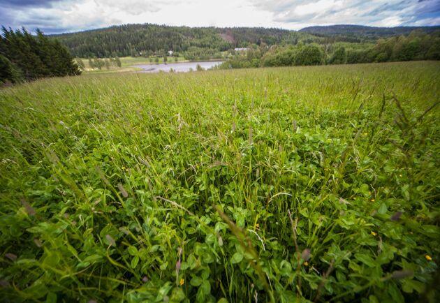 Jordbruksverket föreslår att vallodling inte berättigar till torkstöd.