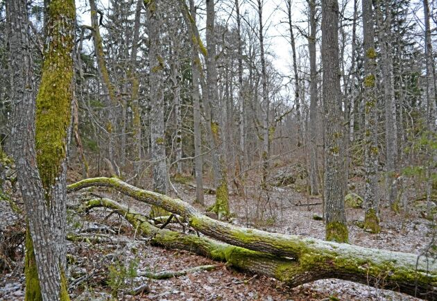 Enligt Skogsstyrelsens skattning är mellan 600 000 och 1 miljon hektar klassade som nyckelbiotoper.