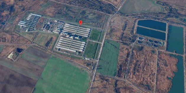Danskägd grisgård i Ukraina drabbad av svinpest