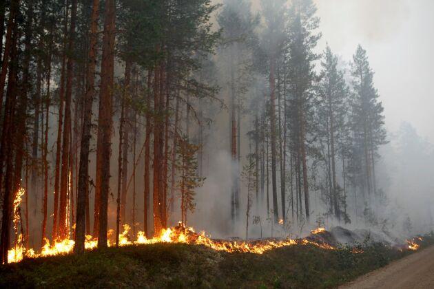 Skogsbranden vid Kårböle strax utanför Ljusdal i juli 2018.