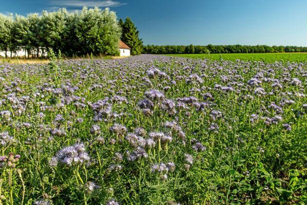 Vilka odlingsmetoder gynnar ekologisk mångfald?