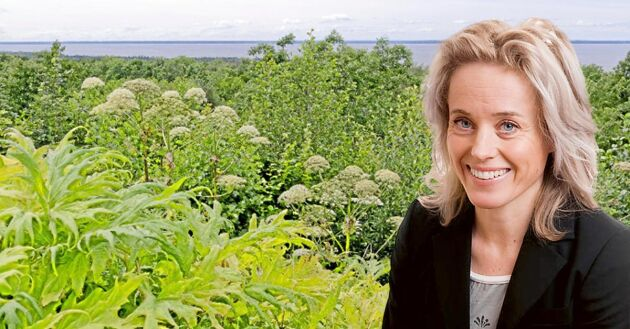 Juristen Jessica Wieslander svarar på läsarfrågor i Land Lantbruk, denna vecka om invasiva arter som jättebjörnlokan.