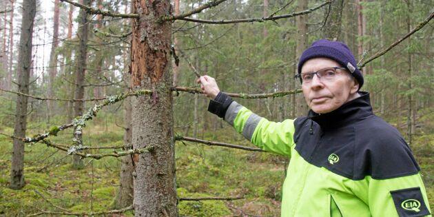 Han varnar för sextandad barkborre