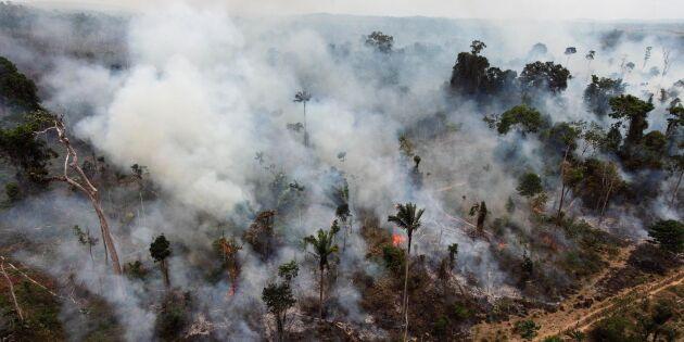 Bolsonaro skyller skogsbränder på aktivister