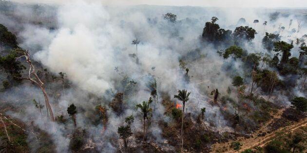 Bolsonaro beskyller nu aktivister för skogsbränder