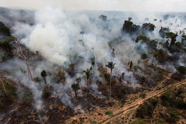 En brand i Amazonas regnskog.