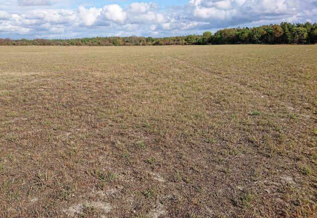 Det råder stor brist på grovfoder på södra Gotland och många djurbönder har knappt fått ihop en vallskörd.