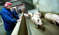 Stigande grispris i både Danmark och Sverige