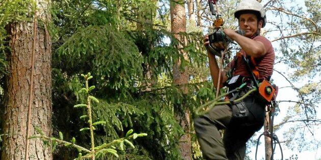 ATL TV: Han skruvar sig upp i träden