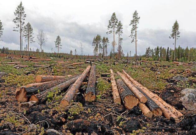Sveaskog avverkning efter 2018 års skogsbrand i Ljusdal.