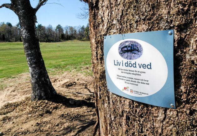 Nytt för i år är även en boplats för ekoxar på golfbanan.