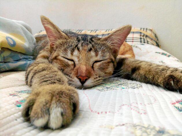 Mesta tiden går åt till att sova när katten får bestämma helt själv.