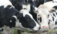 Kor utsatts för vanvård i Småland