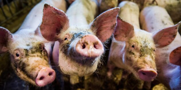 Antibiotikaresistens ökar inom EU