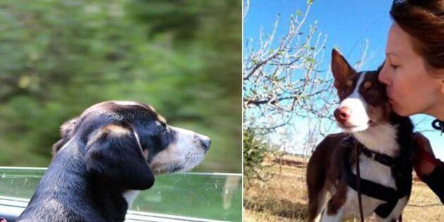 Gränslös kärlek! De vill hjälpa spanska hundar till Sverige