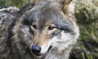 Frias för jaktbrott
